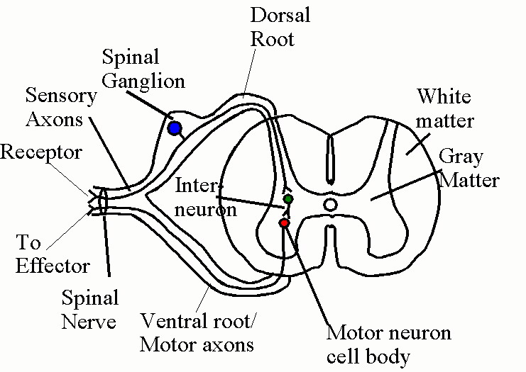 Anatomy Physiology Web Links